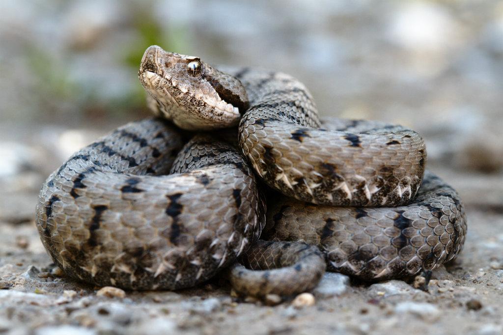 Slangen1