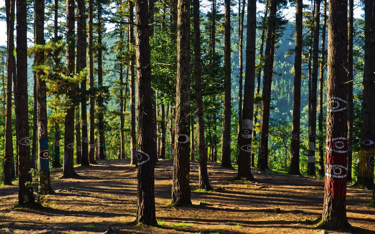 Bosque De Oma (Kortezubi, Vizcaya)
