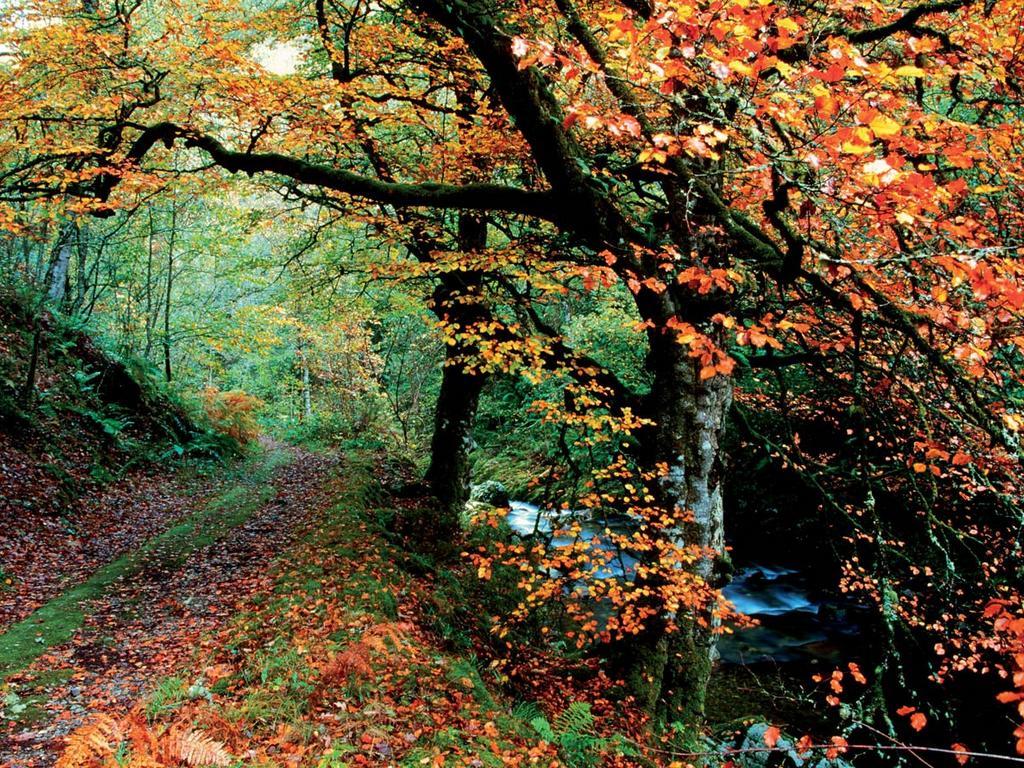 Bosque-de-muniellos-asturie