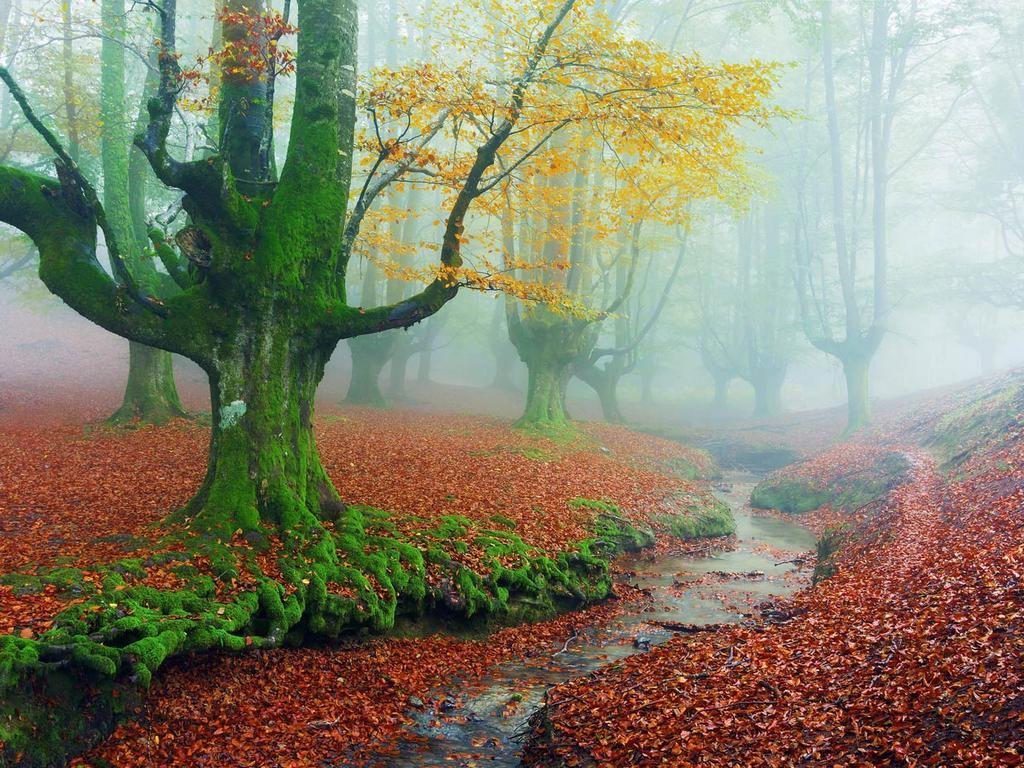 Parque-natural-de-gorbeia-baskenland